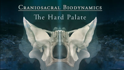 Biodynamic Craniosacral Therapy